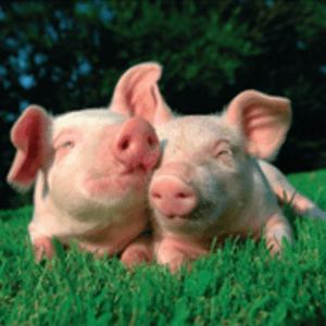 Радио schlagerschweinchen Германия